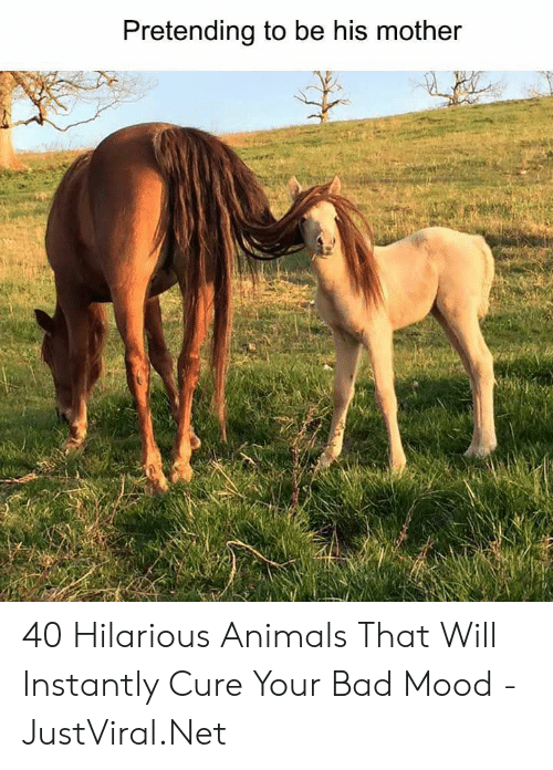 Hilarious Animals: Pretending to be his mother 40 Hilarious Animals That Will Instantly Cure Your Bad Mood - JustViral.Net