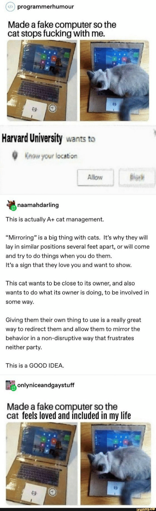 "Cats, Fake, and Fucking: programmerhumour  Made a fake computer so the  cat stops fucking with me.  Harvard University wants to  Know your location  Allow B  naamahdarling  This is actually A+ cat management.  ""Mirroring"" is a big thing with cats. It's why they will  lay in similar positions several feet apart, or will come  and try to do things when you do them  It's a sign that they love you and want to show.  This cat wants to be close to its owner, and also  wants to do what its owner is doing, to be involved in  some way  Giving them their own thing to use is a really great  way to redirect them and allow them to mirror the  behavior in a non-disruptive way that frustrates  neither party.  This is a GOOD IDEA.  onlyniceandgaystuff  Made a fake computer so the  cat feels loved and included in my life  funny"