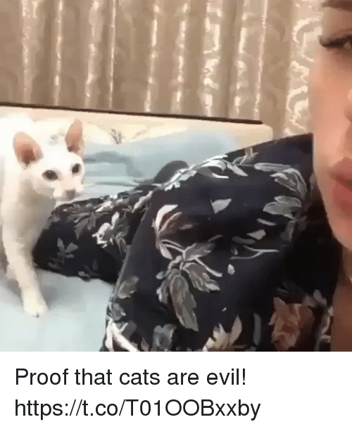 Cats, Funny, and Evil: Proof that cats are evil! https://t.co/T01OOBxxby