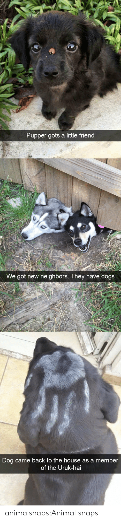 Dogs, Target, and Tumblr: Pupper gots a little friend   We got new neighbors. They have dogs   Dog came back to the house as a member  of the Uruk-hai animalsnaps:Animal snaps