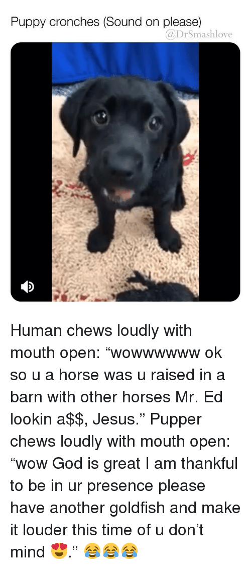 """God, Goldfish, and Horses: Puppy cronches (Sound on please)  @DrSmashlove Human chews loudly with mouth open: """"wowwwwww ok so u a horse was u raised in a barn with other horses Mr. Ed lookin a$$, Jesus."""" Pupper chews loudly with mouth open: """"wow God is great I am thankful to be in ur presence please have another goldfish and make it louder this time of u don't mind 😍."""" 😂😂😂"""