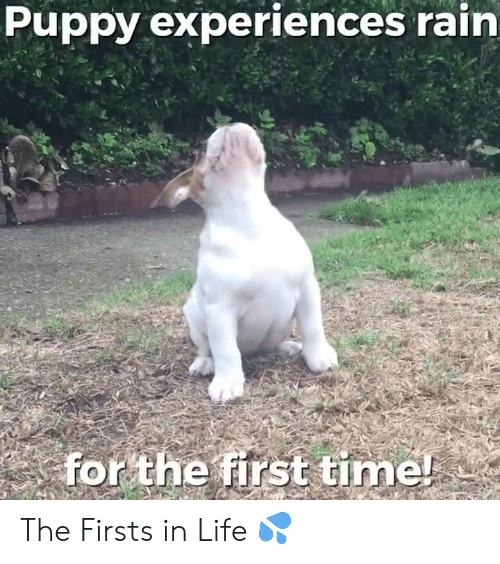 Life, Memes, and Puppy: Puppy experiences rain  for the first time! The Firsts in Life  💦