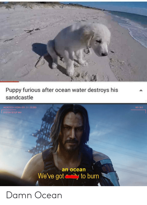 Ocean, Puppy, and Water: Puppy furious after ocean water destroys his  sandcastle  MICROTECH HYDRA VER 2.1 22.003  BIO 30:2  SYSTEM SETUP NAV  an ocean  We've gotty to burn Damn Ocean
