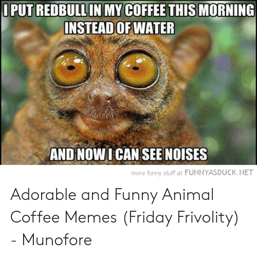 🐣 25+ Best Memes About Coffee Memes Friday | Coffee Memes