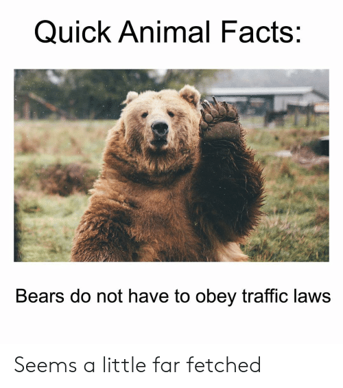 Facts, Memes, and Traffic: Quick Animal Facts:  Bears do not have to obey traffic laws Seems a little far fetched