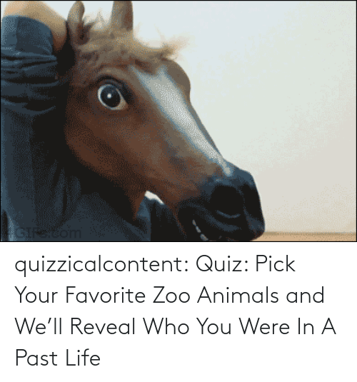 Your: quizzicalcontent:    Quiz: Pick Your Favorite Zoo Animals and We'll Reveal Who You Were In A Past Life