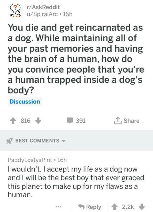 Boy That: ?r/AskReddit  u/SpiralArc 16h  You die and get reincarnated as  a dog. While maintaining all of  your past memories and having  the brain of a human, how do  you convince people that you're  a human trapped inside a dog's  body?  Discussion  Share  391  816  BEST COMMENTS  Paddy LostysPint 16h  I wouldn't. I accept my life as a dog now  and I will be the best boy that ever graced  this planet to make up for my flaws as a  human  Reply 2.2k
