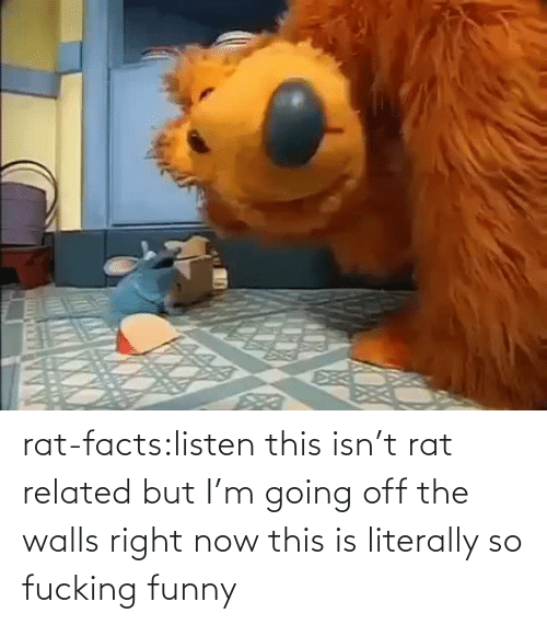Funny: rat-facts:listen this isn't rat related but I'm going off the walls right now this is literally so fucking funny