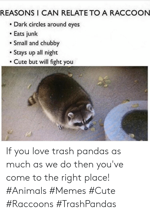 Circles: REASONS I CAN RELATE TO A RACCOON  Dark circles around eyes  Eats junk  Small and chubby  Stays up all night  Cute but will fight you If you love trash pandas as much as we do then you've come to the right place! #Animals #Memes #Cute #Raccoons #TrashPandas