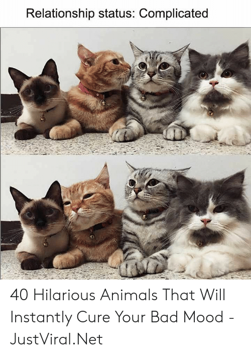 Hilarious Animals: Relationship status: Complicated 40 Hilarious Animals That Will Instantly Cure Your Bad Mood - JustViral.Net