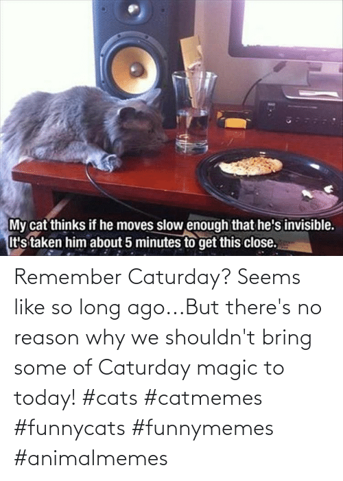 ago: Remember Caturday? Seems like so long ago...But there's no reason why we shouldn't bring some of Caturday magic to today! #cats #catmemes #funnycats #funnymemes #animalmemes