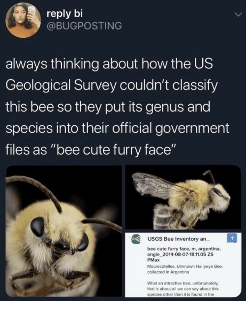 """Cute, Argentina, and Government: reply bi  @BUGPOSTING  always thinking about how the US  Geological Survey couldn't classify  this bee so they put its genus and  species into their official government  files as """"bee cute furry face""""  USGS Bee Inventory an.  bee cute furry face, m, argentina,  angle 2014-08-07-18.11.05 ZS  PMax  Mourecotelles, Unknown Hairyeye Bee,  collected in Argentina  What an attractive bee, unfortunately  that is about all we can say about this  species other than it is found in the"""