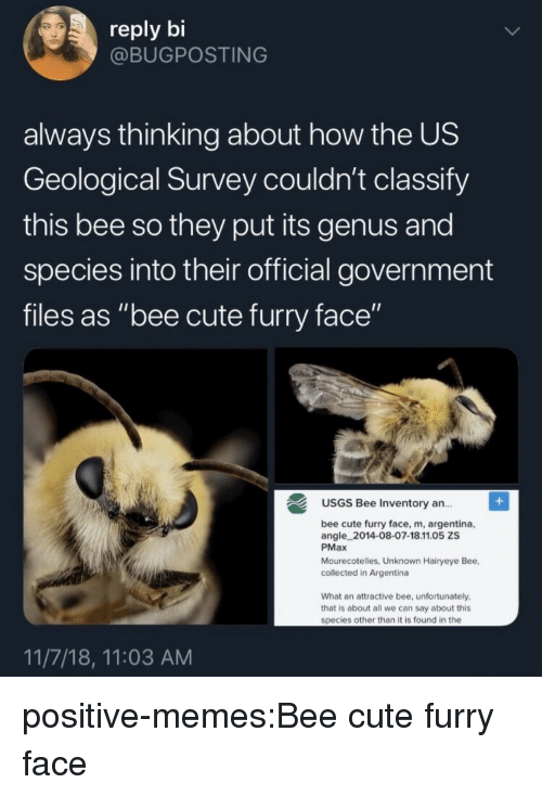 """Cute, Memes, and Target: reply bi  @BUGPOSTING  always thinking about how the US  Geological Survey couldn't classify  this bee so they put its genus and  species into their official government  files as """"bee cute furry face""""  USGS Bee Inventory an..  ce, m, argentina,  angle 2014-08-07-18.11.05 ZS  PMax  Mourecotelles, Unknown Hairyeye Bee,  collected in Argentina  What an attractive bee, unfortunately  that is about all we can say about this  species other than it is found in the  11/7/18, 11:03 AM positive-memes:Bee cute furry face"""