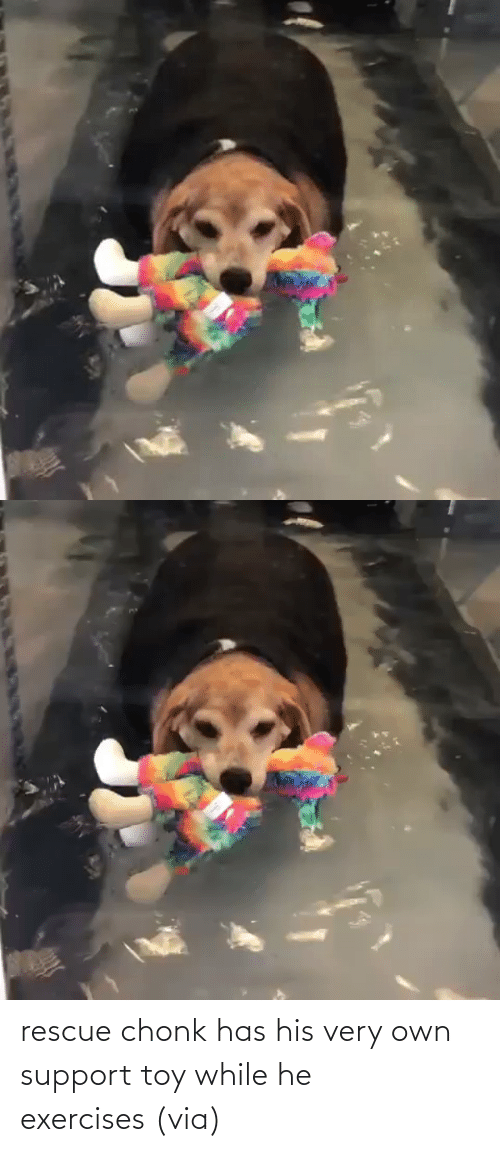 support: rescue chonk has his very own support toy while he exercises (via)