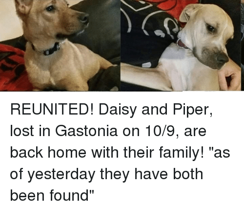 """Family, Memes, and Lost: REUNITED!  Daisy and Piper, lost in Gastonia on 10/9, are back home with their family!  """"as of yesterday they have both been found"""""""