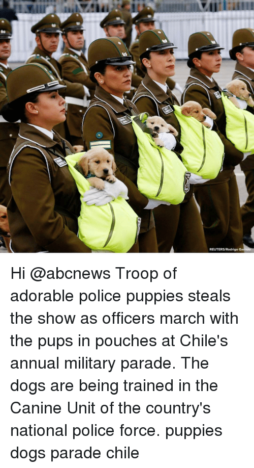 Reuters: REUTERS/Rodrigo Ga Hi @abcnews Troop of adorable police puppies steals the show as officers march with the pups in pouches at Chile's annual military parade. The dogs are being trained in the Canine Unit of the country's national police force. puppies dogs parade chile