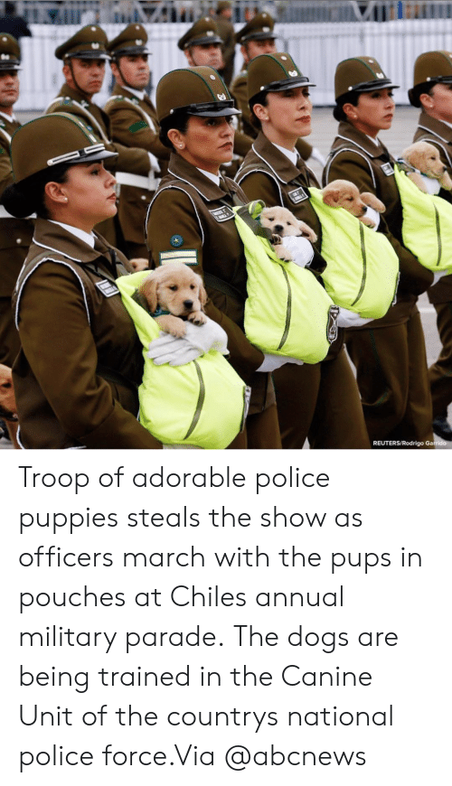 Reuters: REUTERS/Rodrigo Ga Troop of adorable police puppies steals the show as officers march with the pups in pouches at Chiles annual military parade. The dogs are being trained in the Canine Unit of the countrys national police force.Via @abcnews