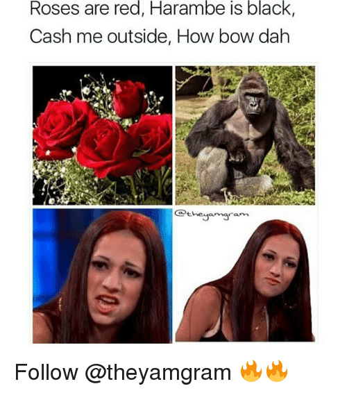 Harambism: Roses are red, Harambe is black,  Cash me outside, How bow dah  heya maram Follow @theyamgram 🔥🔥