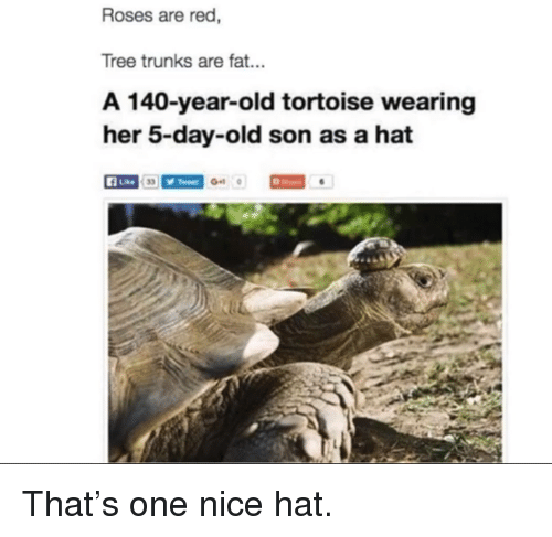 Trunks: Roses are red,  Tree trunks are fat...  A 140-year-old tortoise wearing  her 5-day-old son as a hat  A Lke <p>That&rsquo;s one nice hat.</p>