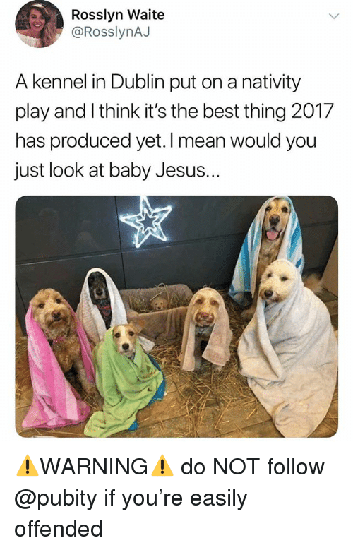 nativity: Rosslyn Waite  @RosslynAJ  A kennel in Dublin put on a nativity  play and I think it's the best thing 2017  has produced yet. I mean would you  just look at baby Jesus.  .. ⚠️WARNING⚠️ do NOT follow @pubity if you're easily offended