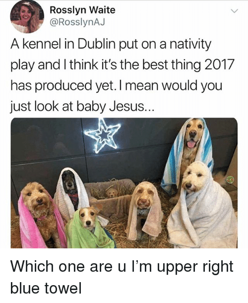 nativity: Rosslyn Waite  @RosslynAJ  A kennel in Dublin put on a nativity  play and l think it's the best thing 2017  has produced yet.I mean would you  just look at baby Jesus. Which one are u I'm upper right blue towel