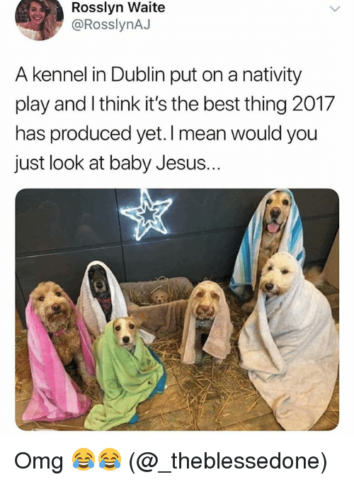 nativity: Rosslyn Waite  @RosslynAJ  A kennel in Dublin put on a nativity  play and I think it's the best thing 2017  has produced yet. I mean  just look at baby Jesus.  would you Omg 😂😂 (@_theblessedone)