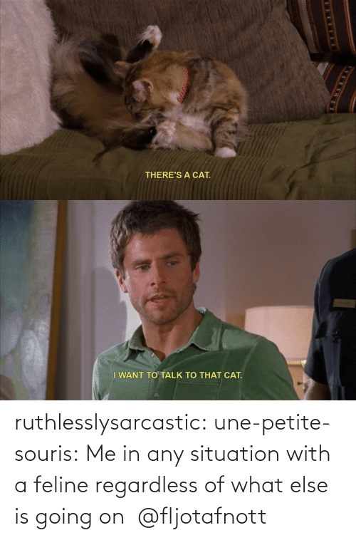 Any: ruthlesslysarcastic:  une-petite-souris: Me in any situation with a feline regardless of what else is going on @fljotafnott