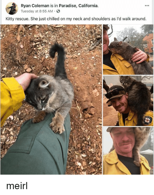 Paradise, California, and MeIRL: Ryan Coleman is in Paradise, California  yTuesday at 8:55 AM.S  Kitty rescue. She just chilled on my neck and shoulders as l'd walk around meirl
