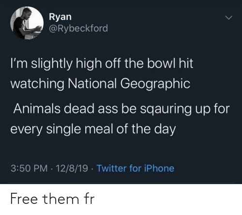 National: Ryan  @Rybeckford  I'm slightly high off the bowl hit  watching National Geographic  Animals dead ass be sqauring up for  every single meal of the day  3:50 PM · 12/8/19 · Twitter for iPhone Free them fr