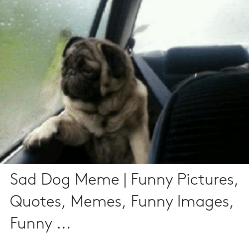 Sad Dog Meme | Funny Pictures Quotes Memes Funny Images ...