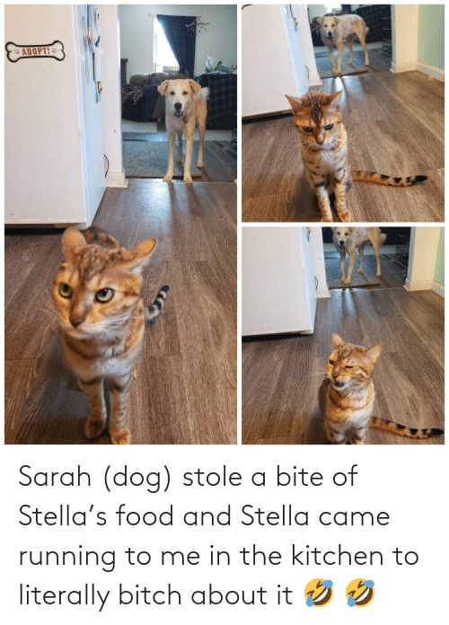 Running: Sarah (dog) stole a bite of Stella's food and Stella came running to me in the kitchen to literally bitch about it 🤣 🤣