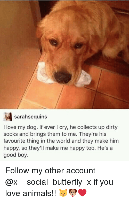 Animals, Love, and Memes: sarahsequins  I love my dog. If ever I cry, he collects up dirty  socks and brings them to me. They're his  favourite thing in the world and they make him  happy, so they'll make me happy too. He's a  good boy. Follow my other account @x__social_butterfly_x if you love animals!! 🐱🐶❤