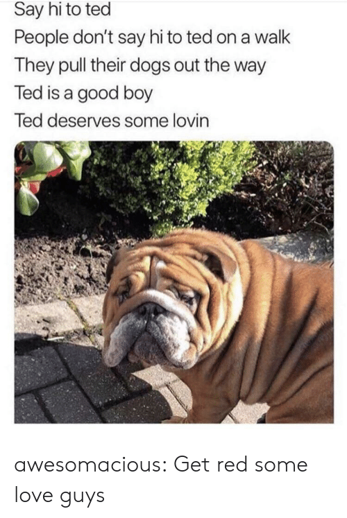 Dogs, Love, and Ted: Say hi to ted  People don't say hi to ted on a walk  They pull their dogs out the way  Ted is a good boy  Ted deserves some lovin awesomacious:  Get red some love guys