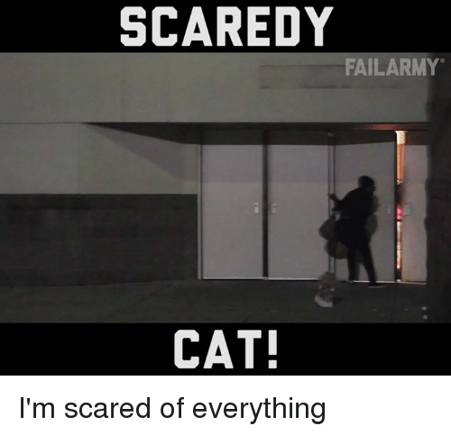 Im Scared Of Everything