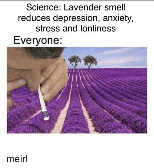 Smell, Anxiety, and Depression: Science: Lavender smell  reduces depression, anxiety,  stress and lonliness  Everyone: meirl