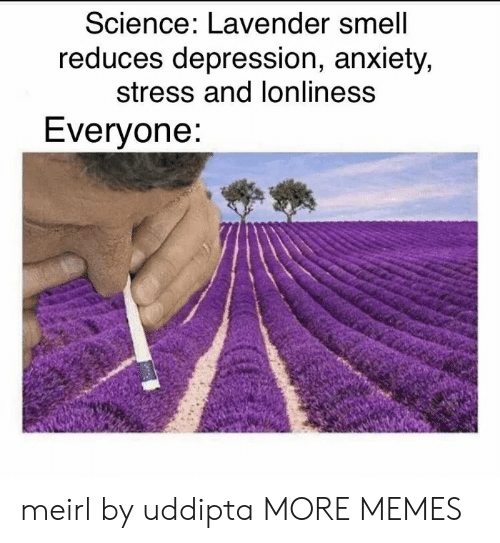 Dank, Memes, and Smell: Science: Lavender smell  reduces depression, anxiety,  stress and lonliness  Everyone: meirl by uddipta MORE MEMES