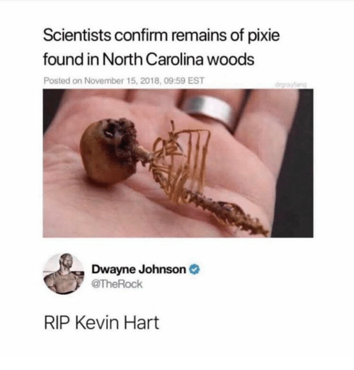 Kevin Hart: Scientists confirm remains of pixie  found in North Carolina woods  Posted on November 15, 2018, 09:59 EST  drgraylang  Dwayne Johnson  TheRock  RIP Kevin Hart