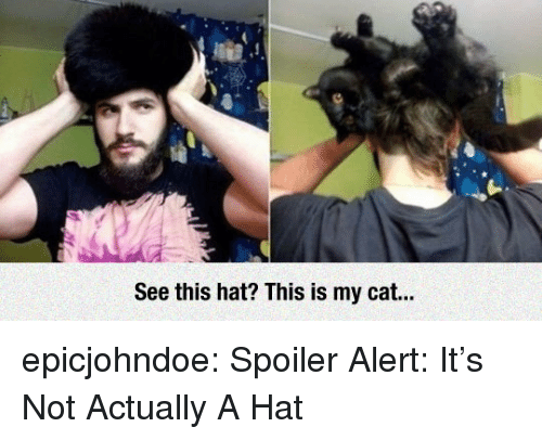 Tumblr, Blog, and Cat: See this hat? This is my cat... epicjohndoe:  Spoiler Alert: It's Not Actually A Hat