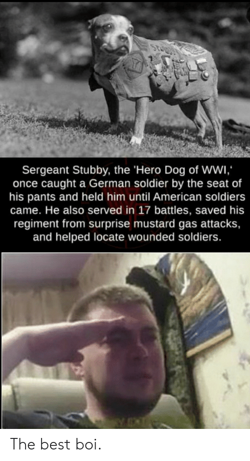 served: Sergeant Stubby, the 'Hero Dog of Wwi  once caught a German soldier by the seat of  his pants and held him until American soldiers  came. He also served in 17 battles, saved his  regiment from surprise mustard gas attacks,  and helped locate wounded soldiers. The best boi.