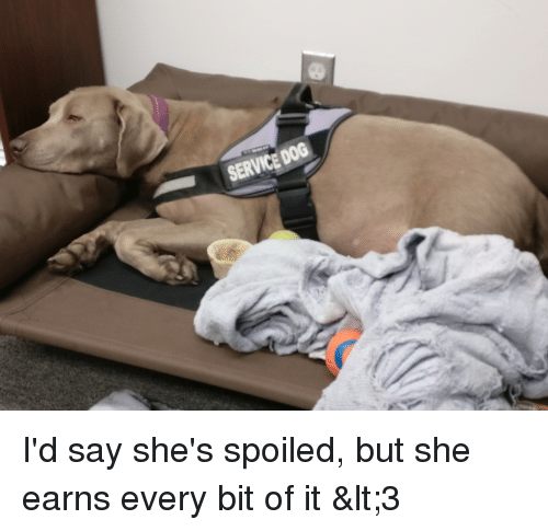 Dog, She, and Service: SERVICE DOG I'd say she's spoiled, but she earns every bit of it <3