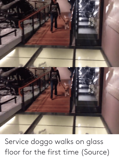 The First: Service doggo walks on glass floor for the first time (Source)