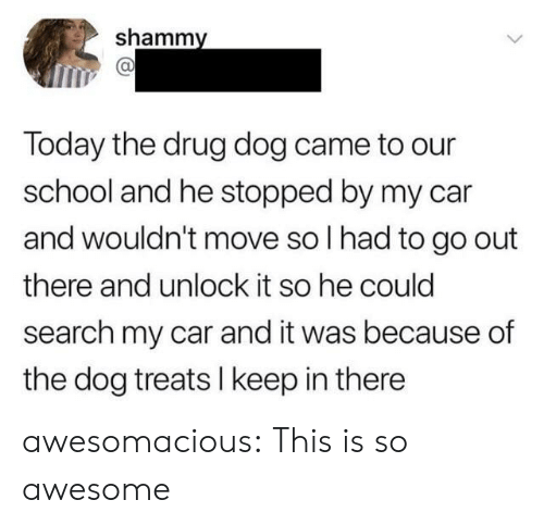 School, Tumblr, and Blog: shammy  Today the drug dog came to our  school and he stopped by my car  and wouldn't move so I had to go out  there and unlock it so he could  search my car and it was because of  the dog treats I keep in there awesomacious:  This is so awesome