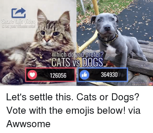 cat-or-dog