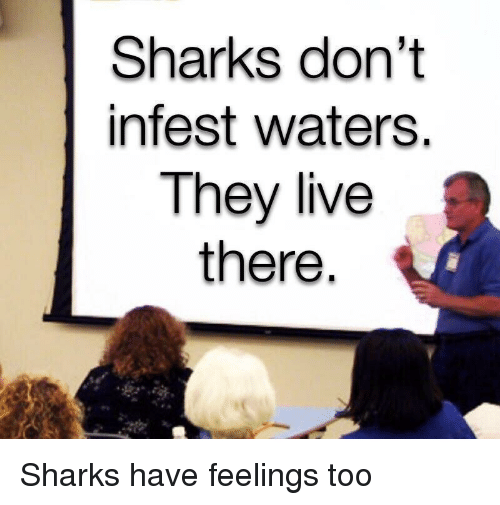 Live, Sharks, and They Live: Sharks don't  infest waters.  They live  there Sharks have feelings too