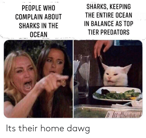 dawg: SHARKS, KEEPING  PEOPLE WHO  THE ENTIRE OCEAN  COMPLAIN ABOUT  IN BALANCE AS TOP  SHARKS IN THE  TIER PREDATORS  OCEAN Its their home dawg