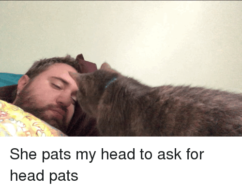 Head Pats: She pats my head to ask for head pats