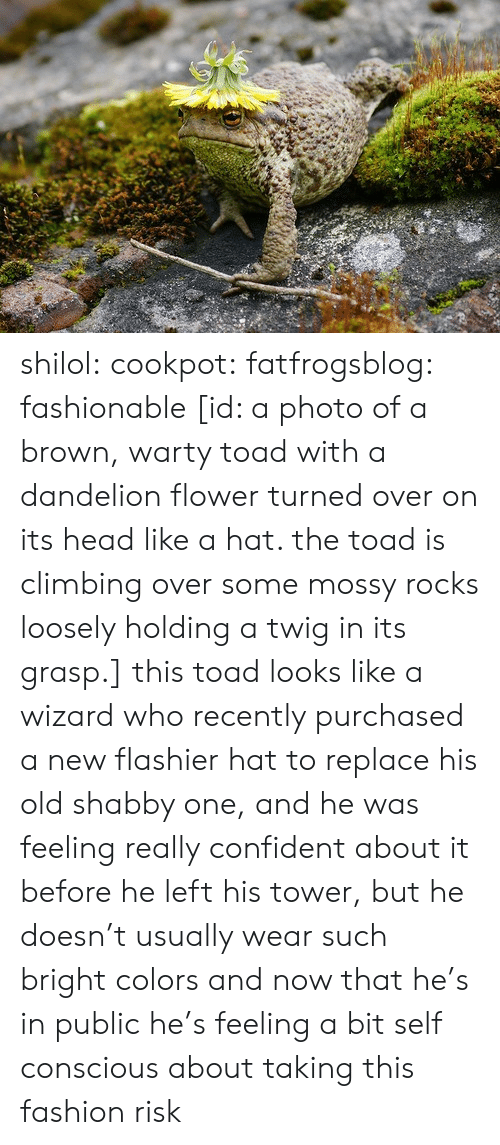 Climbing, Fashion, and Head: shilol: cookpot:  fatfrogsblog: fashionable [id: a photo of a brown, warty toad with a dandelion flower turned over on its head like a hat. the toad is climbing over some mossy rocks loosely holding a twig in its grasp.]   this toad looks like a wizard who recently purchased a new flashier hat to replace his old shabby one, and he was feeling really confident about it before he left his tower, but he doesn't usually wear such bright colors and now that he's in public he's feeling a bit self conscious about taking this fashion risk