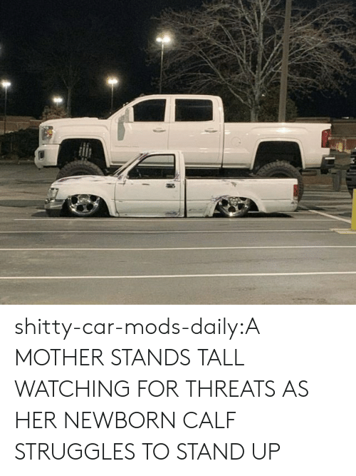 Tumblr, Blog, and Http: shitty-car-mods-daily:A MOTHER STANDS TALL WATCHING FOR THREATS AS HER NEWBORN CALF STRUGGLES TO STAND UP