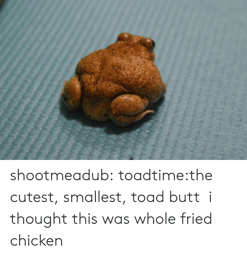 Butt, Tumblr, and Blog: shootmeadub:  toadtime:the cutest, smallest, toad butt  i thought this was whole fried chicken
