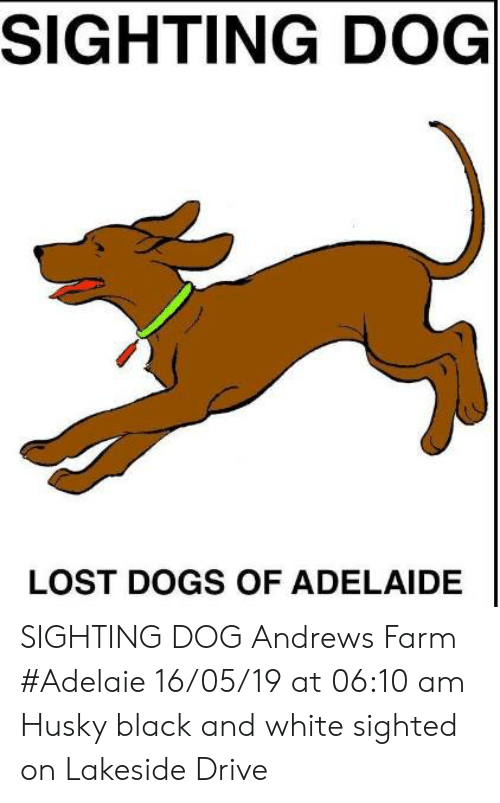Dogs, Memes, and Lost: SIGHTING DOG  LOST DOGS OF ADELAIDE SIGHTING DOG Andrews Farm #Adelaie 16/05/19 at 06:10 am Husky black and white  sighted on Lakeside Drive